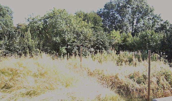 Essais de permaculture sur buttes. Jardin10