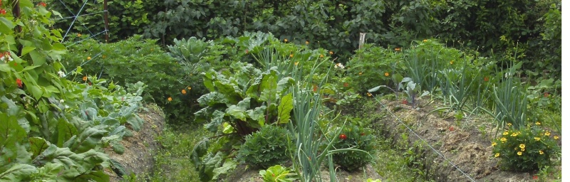 Essais de permaculture sur buttes. Permac10