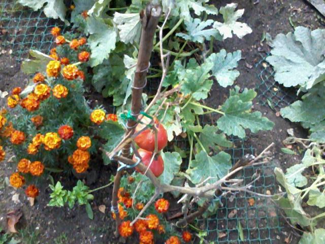 Apprentissage agraire, famille Valtin Photo014