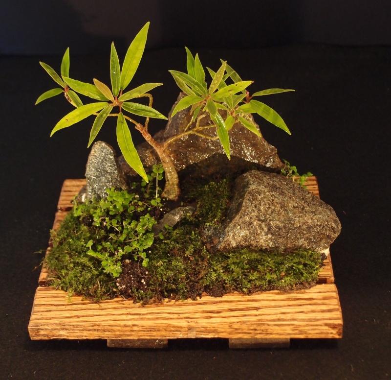 Hello all...Saikei Bonsai11