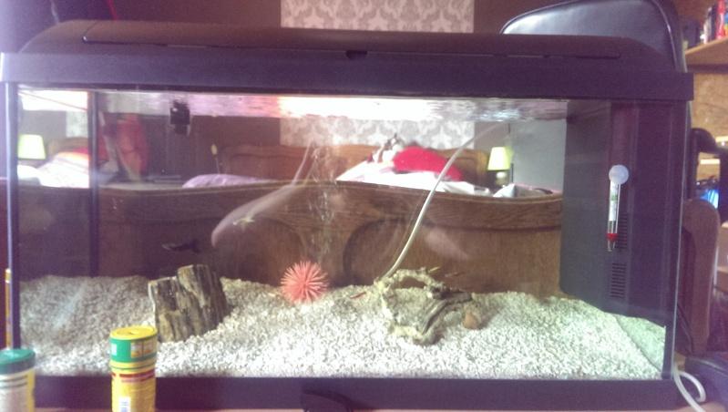 Aide pour nouvel Aquarium  Imag0012