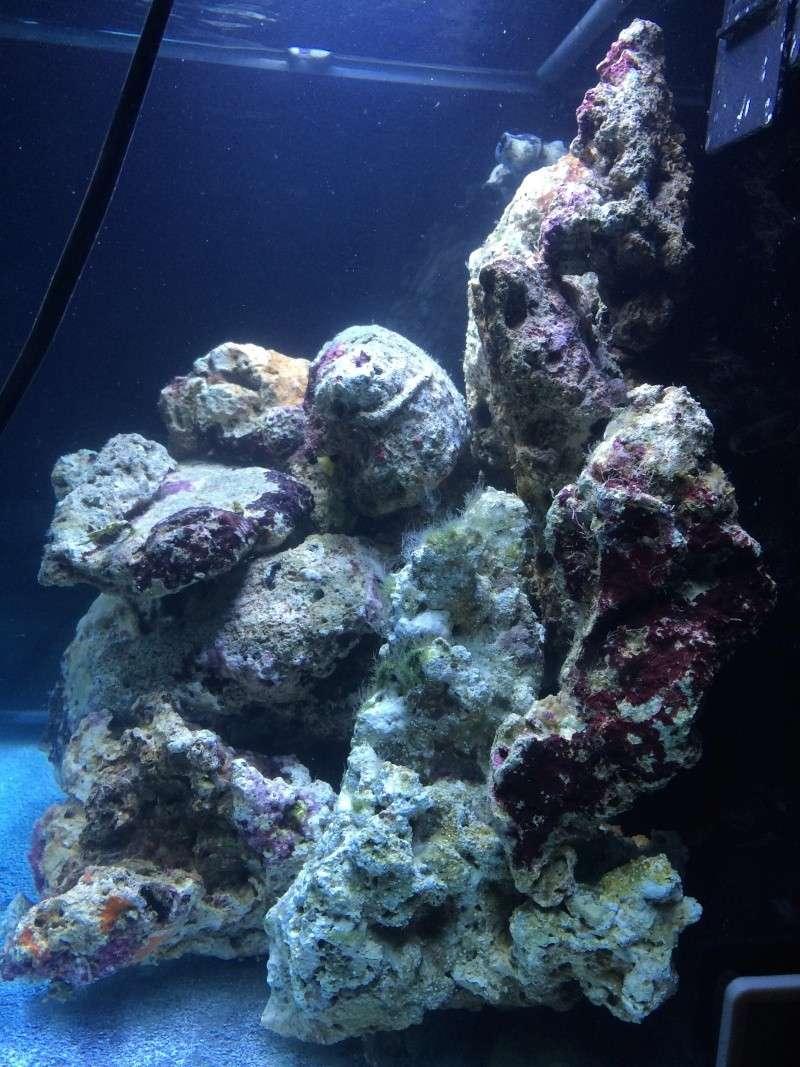 Mon premier recifal (Red Sea Max 130D) Img_1811