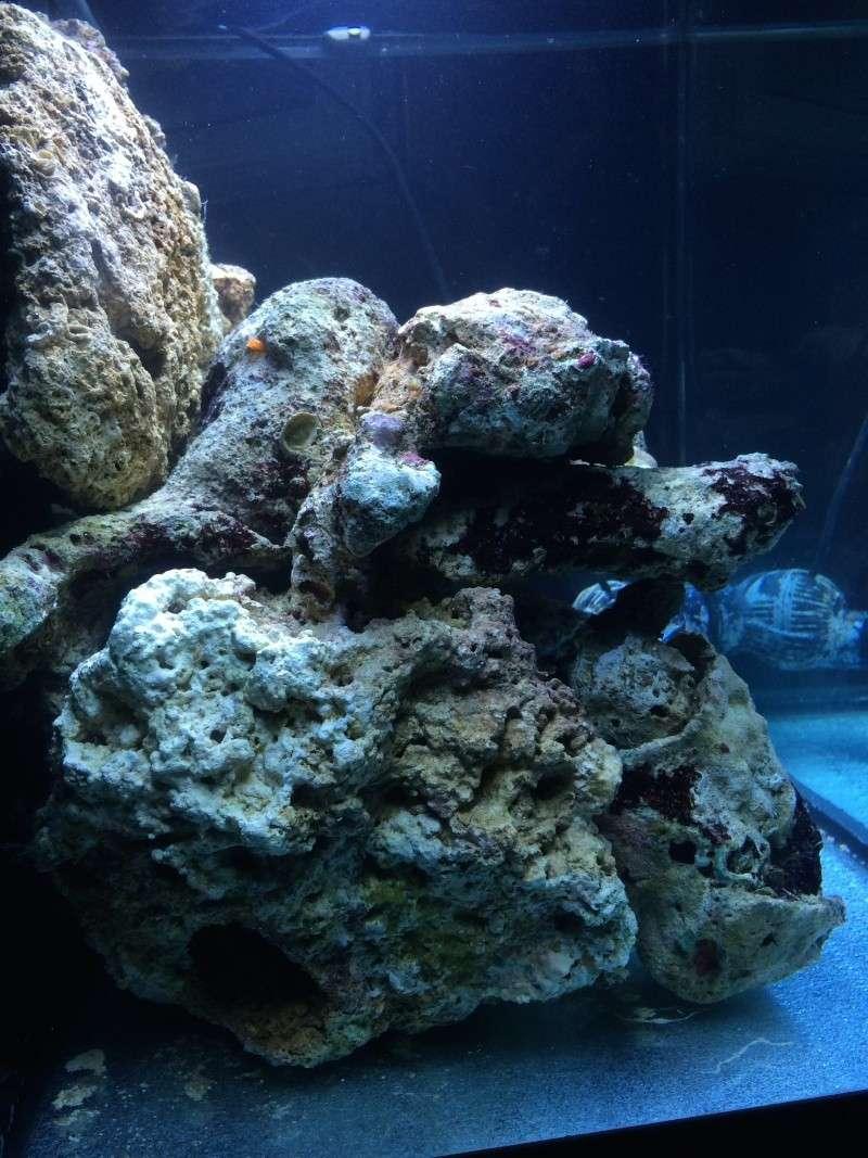 Mon premier recifal (Red Sea Max 130D) Img_1812