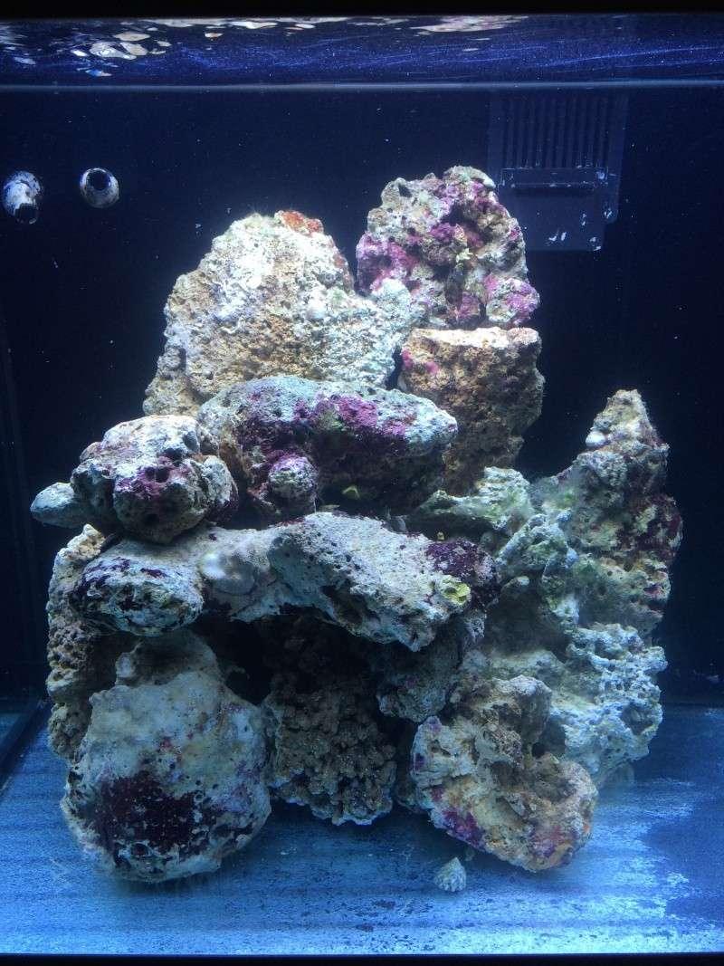 Mon premier recifal (Red Sea Max 130D) Img_1813