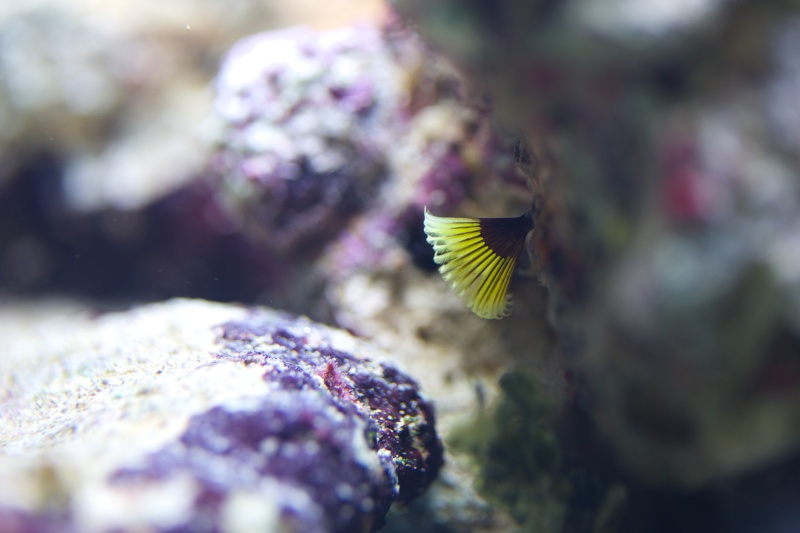Mon premier recifal (Red Sea Max 130D) Img_6412
