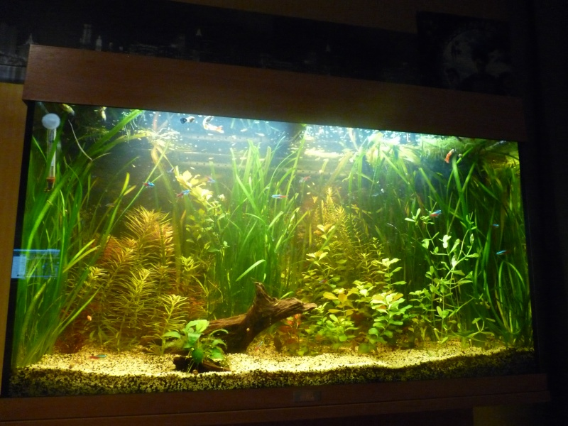 """Juwel Rio 125L """"Jungle Park"""" - Page 3 P1040710"""