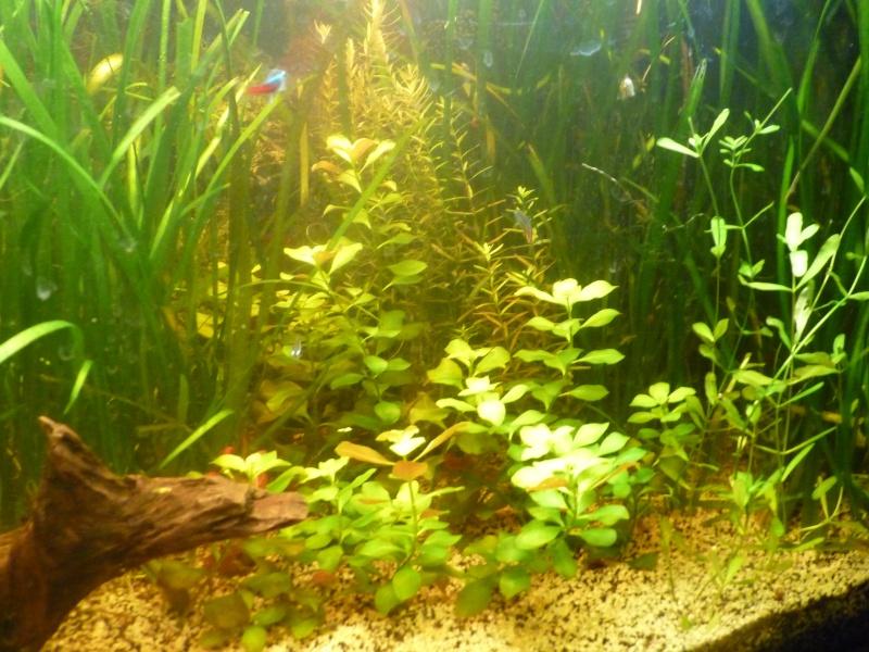 """Juwel Rio 125L """"Jungle Park"""" - Page 3 P1040712"""