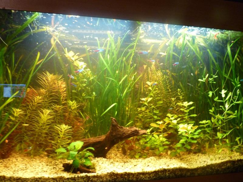 """Juwel Rio 125L """"Jungle Park"""" - Page 3 P1040713"""