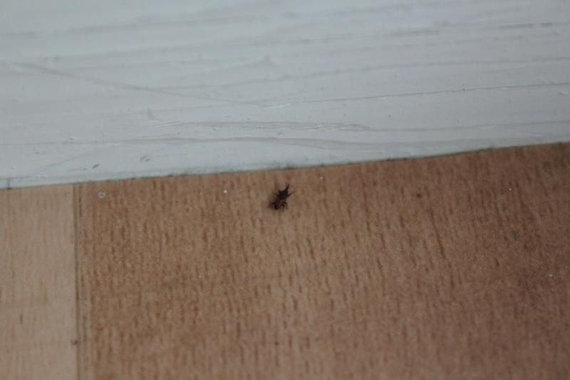 Petit insecte noir sur le sol et le mur 110