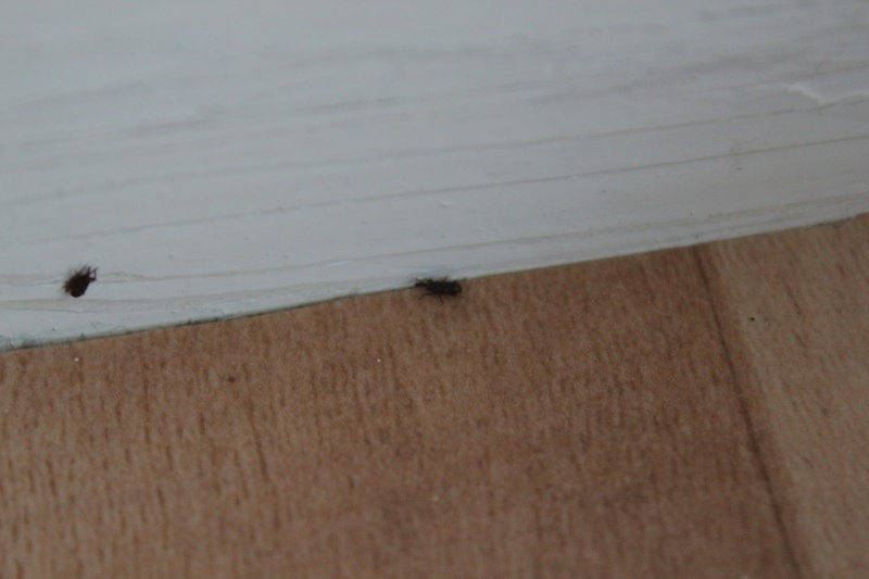 Petit insecte noir sur le sol et le mur 210
