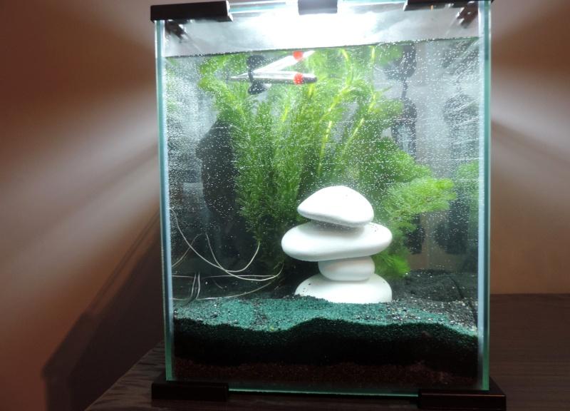 mon 1er grand aqua Dscn3913