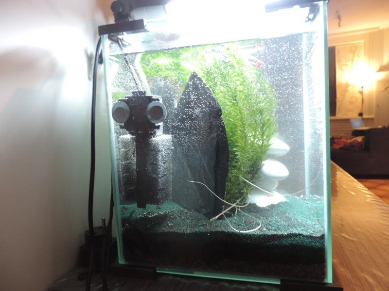 mon 1er grand aqua Dscn3914