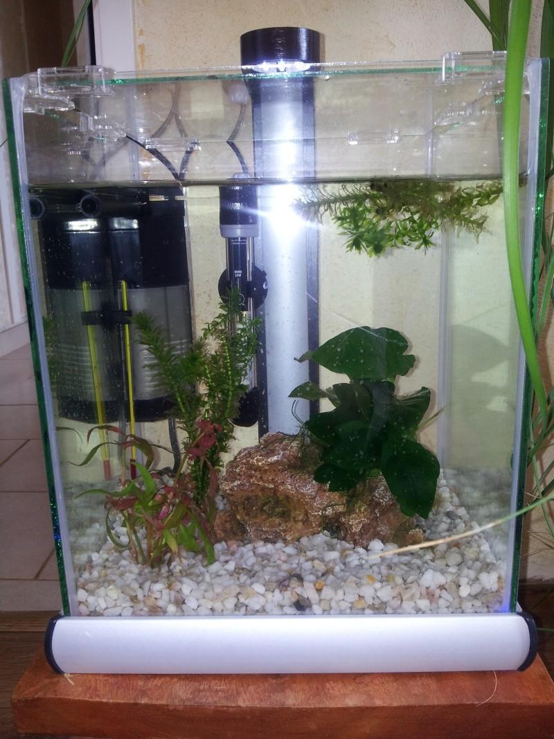 Mon premier aqua 20141011
