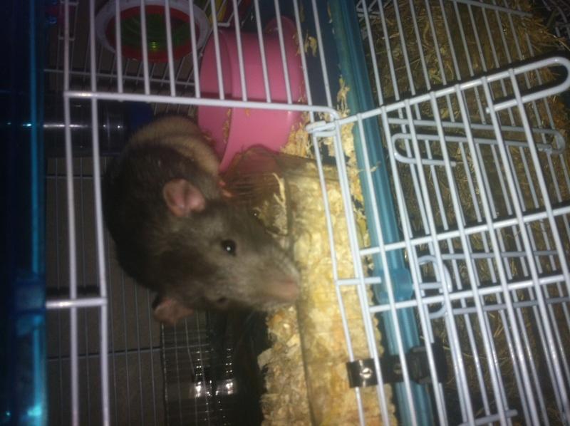 Mon Rat :)  Img_0814