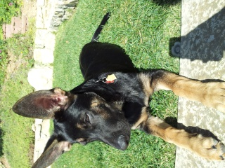 Memphis GSD - Page 2 20141015