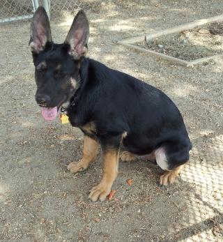 Memphis GSD - Page 2 20141017