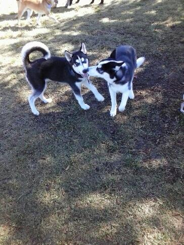 meanwhile at the dog park 2565710
