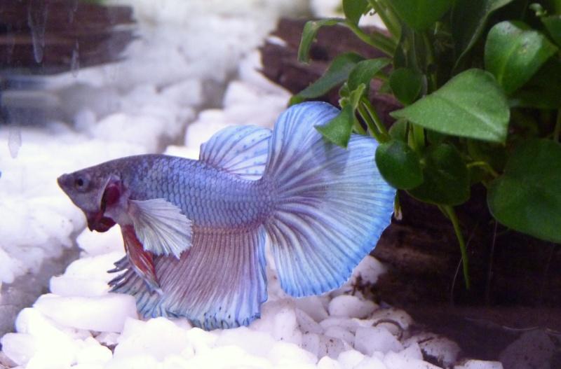 Petit Blue :) P1050614