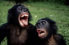 Le mouvement indigo et / chez les adolescents - Besoin d'aide  - Page 3 Bonobo10