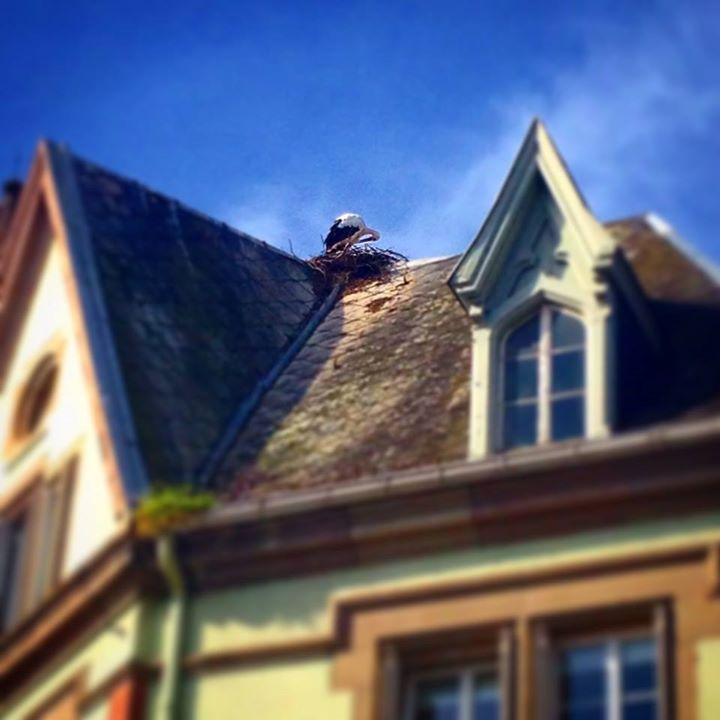 Weekend 27 et 28/09/2014 Vous aurez l'Alsace et la Lorraine. - Page 12 10665910