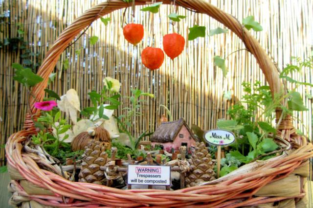 Jardin miniature Img_9811