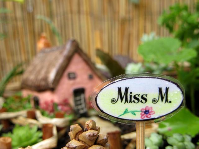 Jardin miniature Img_9813