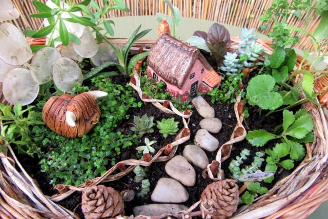 Jardin miniature Img_9816