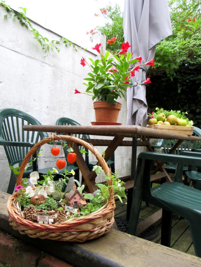 Jardin miniature Img_9831