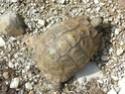 identification d'une belle femelle Imgp0713