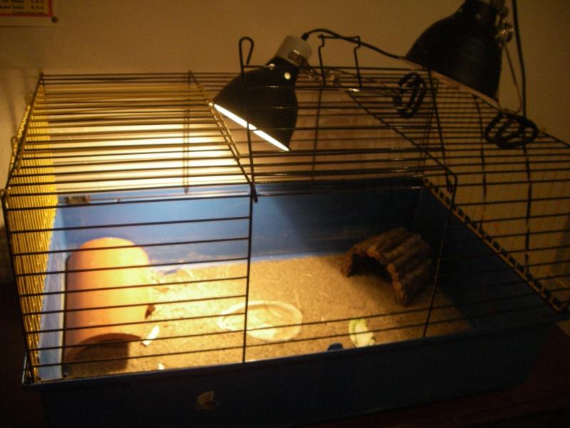 bb tortue et sa cage Imgp2211