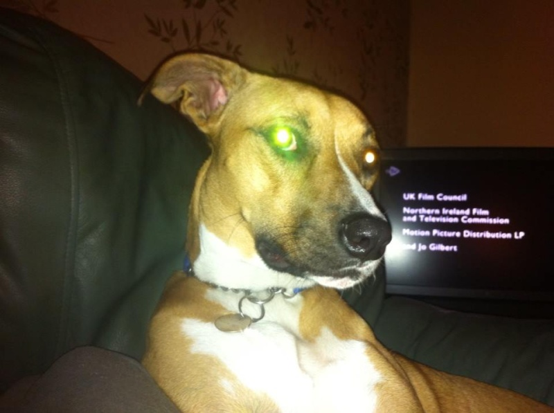 wondering what breed my dog is Susie211