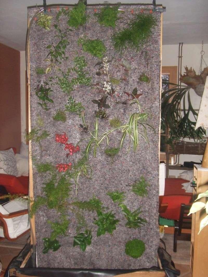 mur végétal: évolution dans le temps et pH Mur_2010