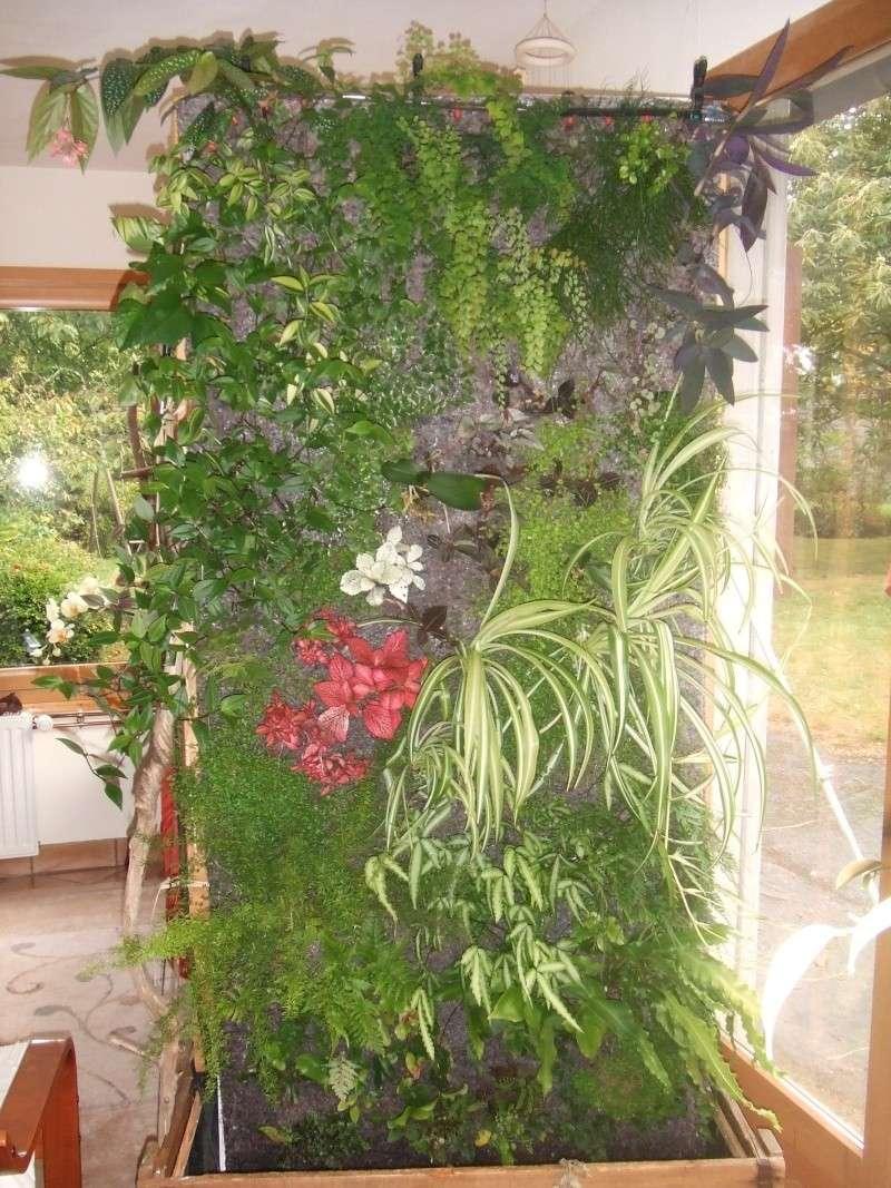 mur végétal: évolution dans le temps et pH Mur_2011