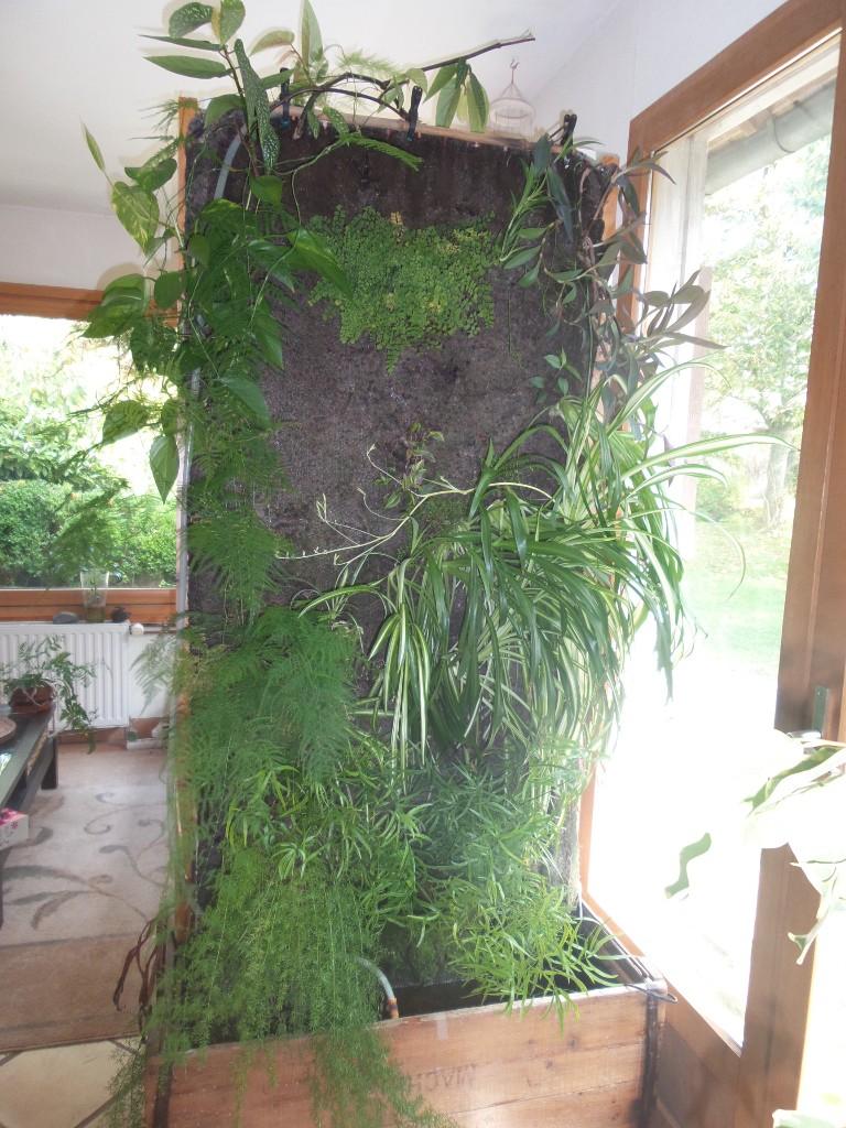 mur végétal: évolution dans le temps et pH Mur_oc10