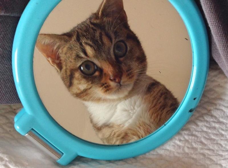 Junon, chatonne européenne tigrée et blanche, née le 19/06/14 Junon10