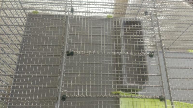 Cage regrillagé; elles grignotent les coleçons Imag0226