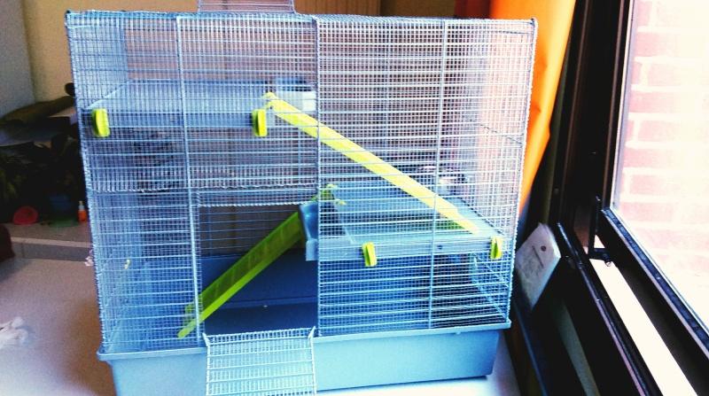 VENDUE Cage Voltrega (2-3 rats) Toulouse Imag0913