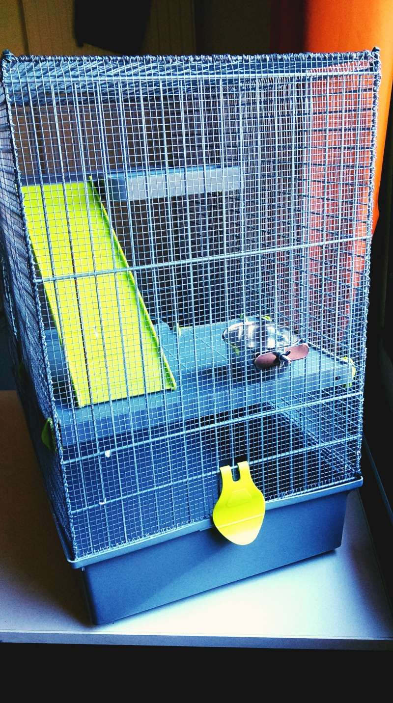 VENDUE Cage Voltrega (2-3 rats) Toulouse Imag0914