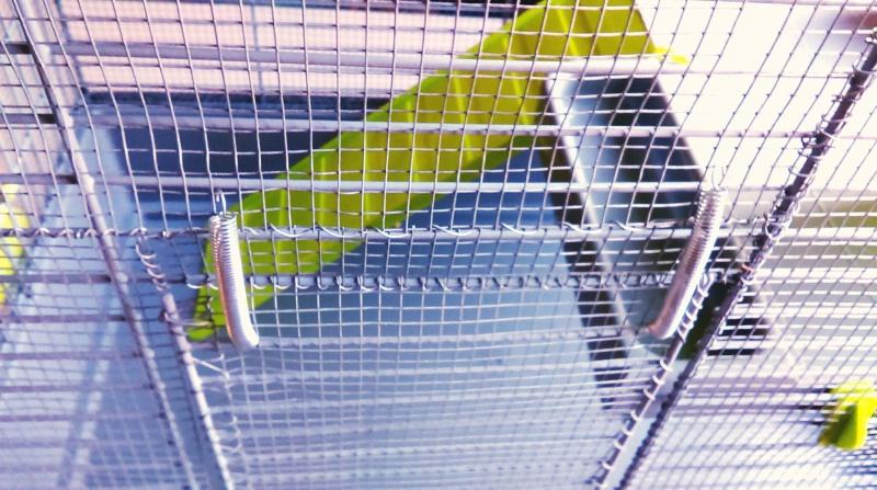 VENDUE Cage Voltrega (2-3 rats) Toulouse Imag0915