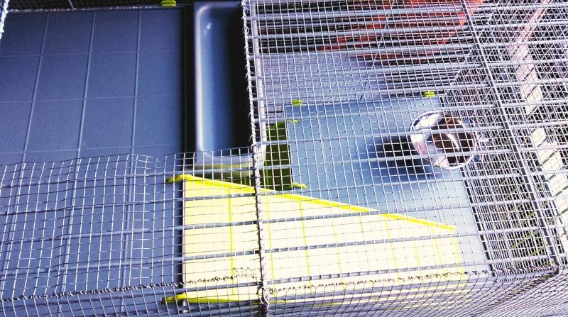 VENDUE Cage Voltrega (2-3 rats) Toulouse Imag0916
