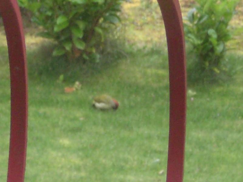 quel est cet oiseau Cimg2516