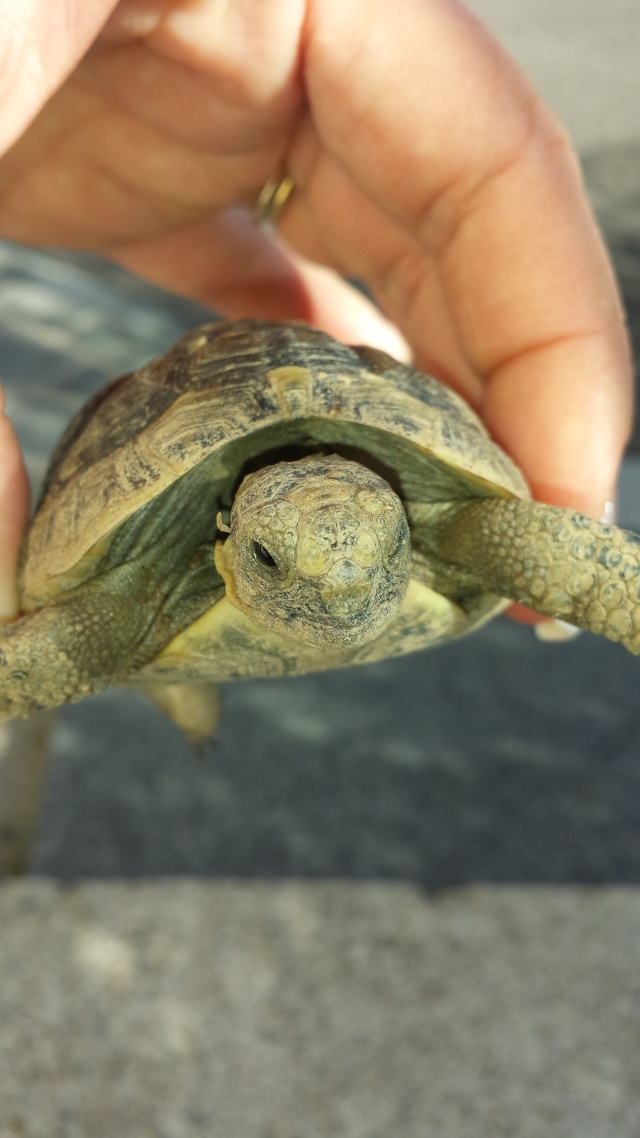 Identification de mes tortues 20141012