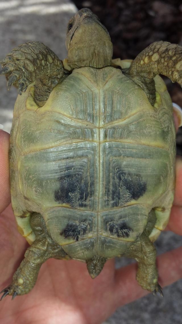 Identification de mes tortues 20141014