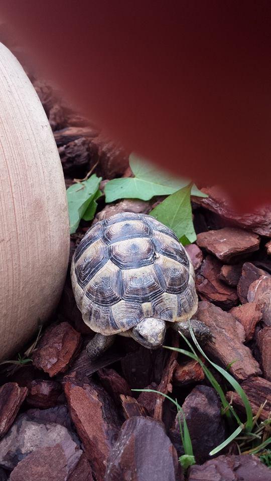 Identification de mes tortues T11
