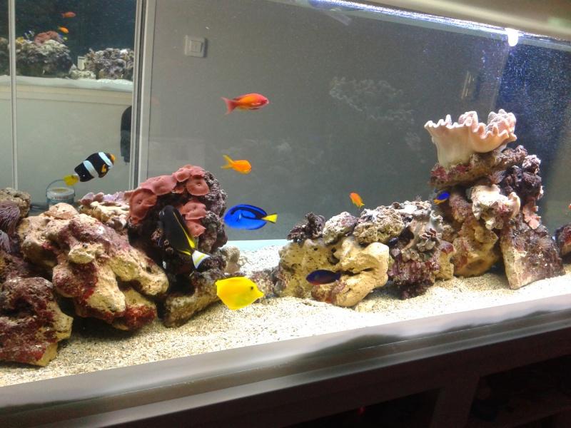 aquarium 1000l 20140912