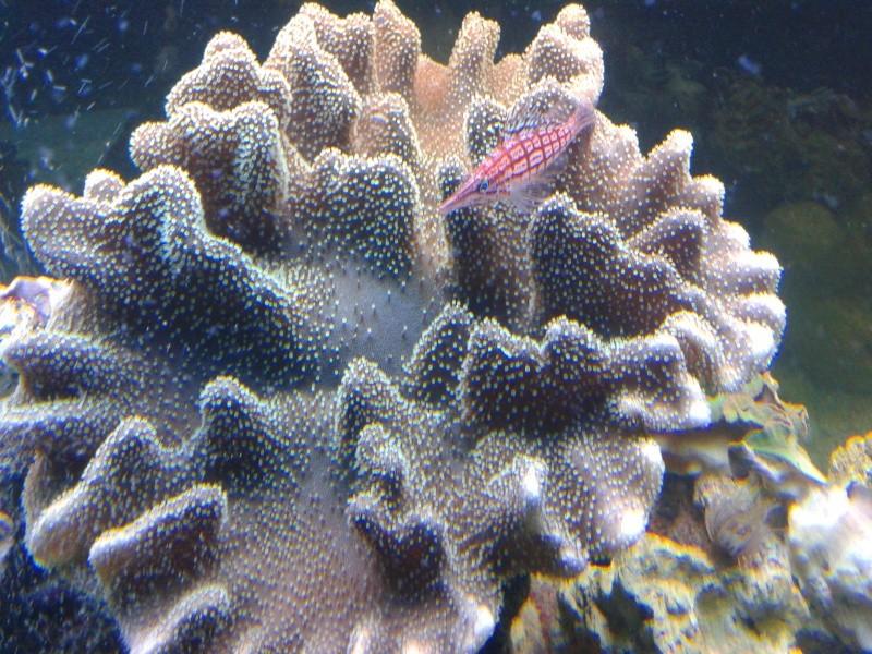 aquarium 1000l 20140913