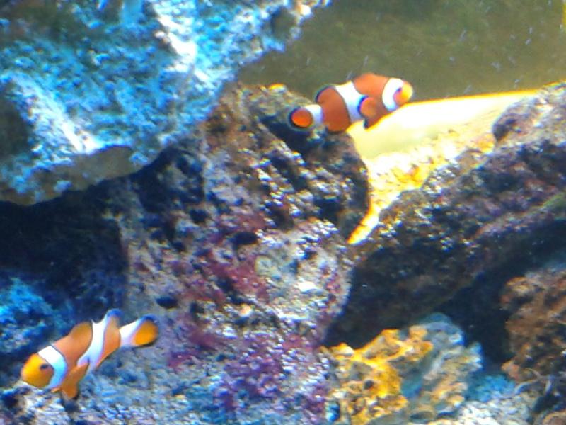 aquarium 1000l 20141013