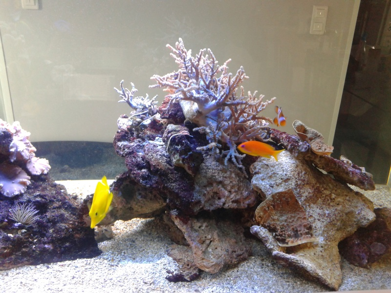 aquarium 1000l 20141014