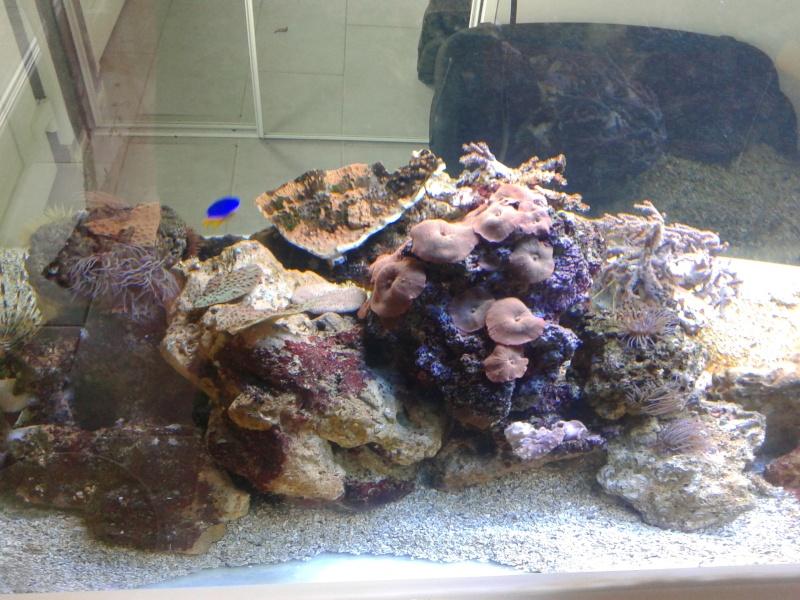 aquarium 1000l 20141016