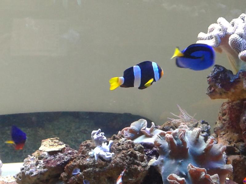 aquarium 1000l 20141017
